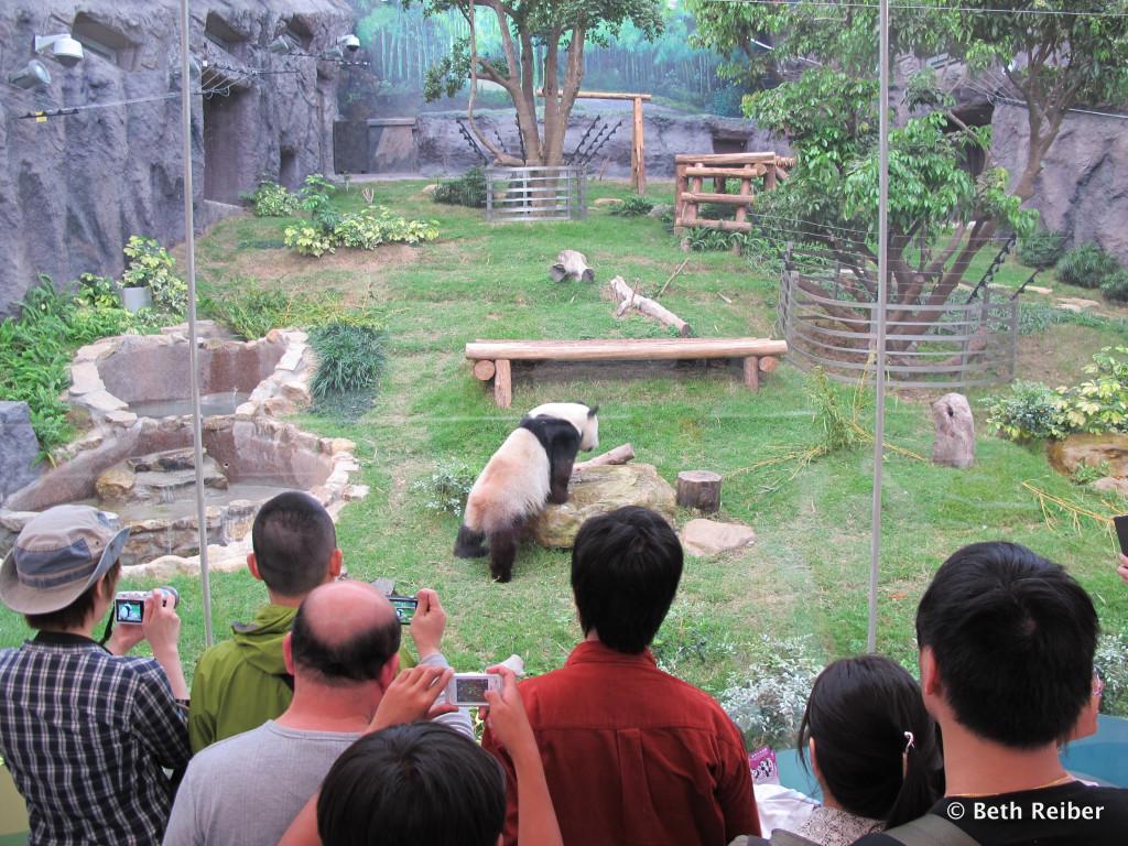 Macau Giant Panda Pavilion copy