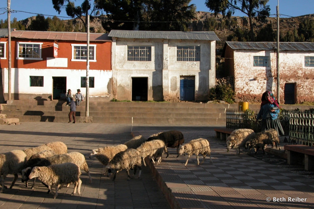 Herding sheep across Amantani's central square